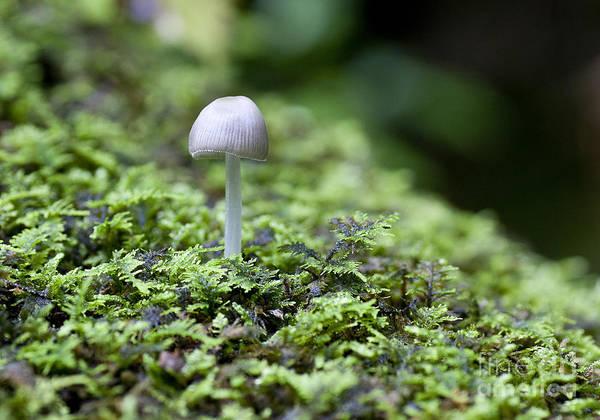 Photograph - Mushroom by Steven Ralser