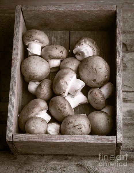 Black Cap Photograph - Mushrooms by Edward Fielding