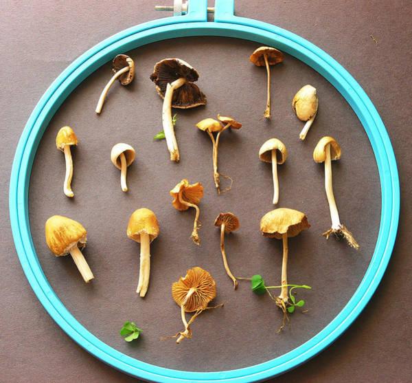 Shrooms Photograph - Mushrooms In Hoop by April Dunlap