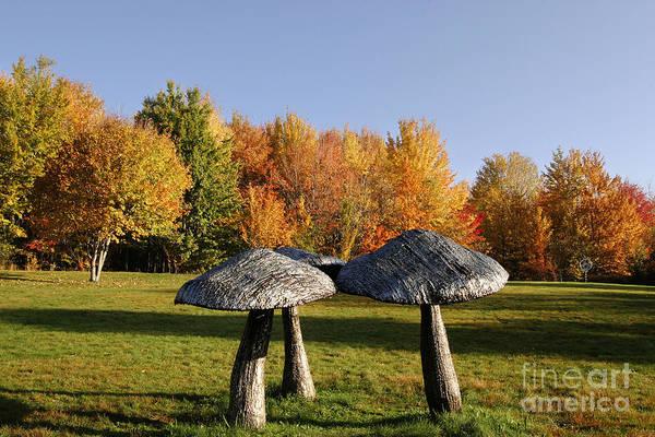 Larry Griffis Jr Photograph - Mushrooms by Mark Baker