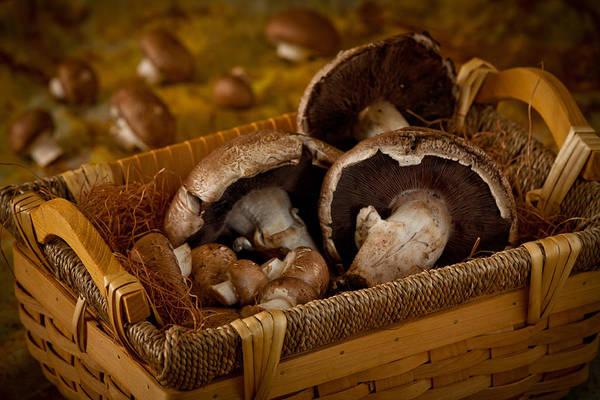 Mushrooms2166 Art Print