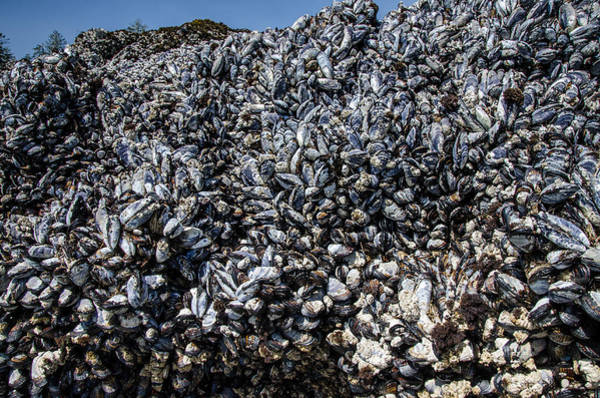 Photograph - Mountain Of Mussels by Roxy Hurtubise