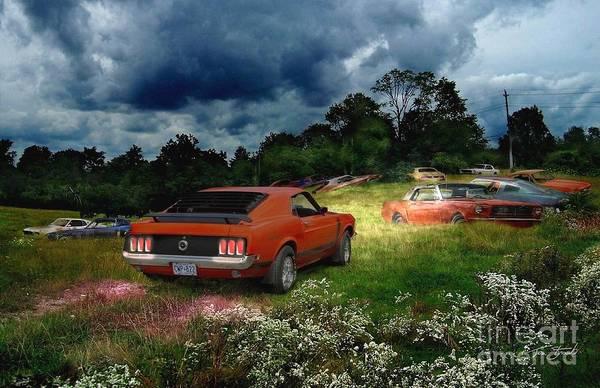 Grave Yard Photograph - Mustang Field by Tom Straub