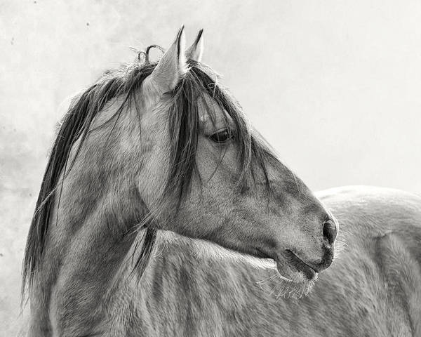 White Horse Photograph - Mustang by Ron  McGinnis