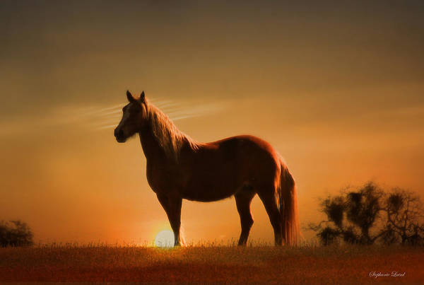 Palomino Photograph - Mustang Sunset by Stephanie Laird