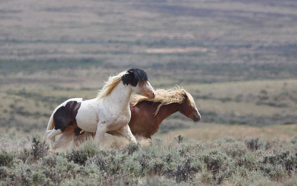 Photograph - Mustangs On The Move by Jean Clark