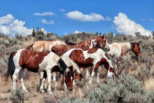Dun Photograph - Mustangs Roaming Free by Kathleen Bishop