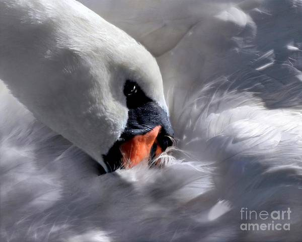 Digital Art - Mute Swan by Dale   Ford