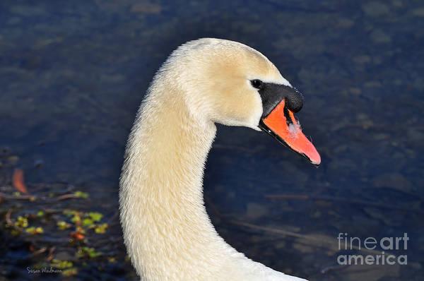 Photograph - Mute Swan In Profile by Susan Wiedmann