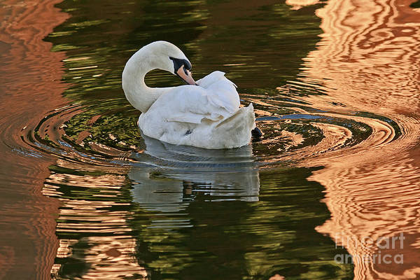 Photograph - Preening by Kate Brown