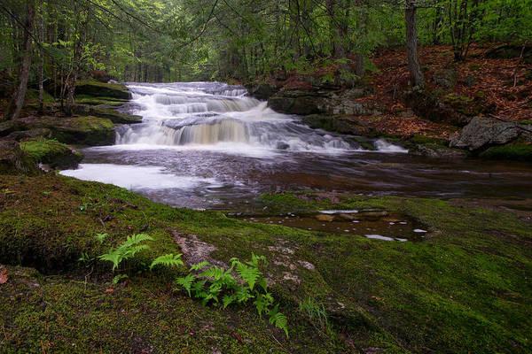 Photograph - Mutiny Brook At Spring by Darylann Leonard Photography