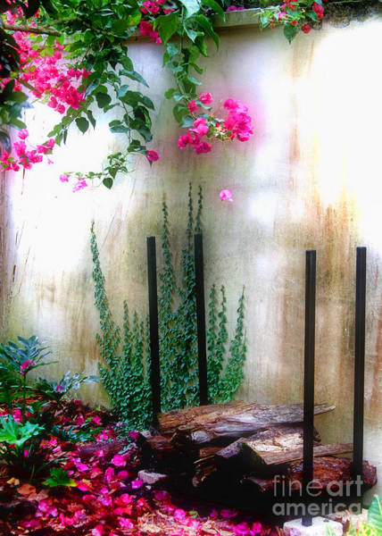 Photograph - My Aunt's Back Yard By Diana Sainz by Diana Raquel Sainz