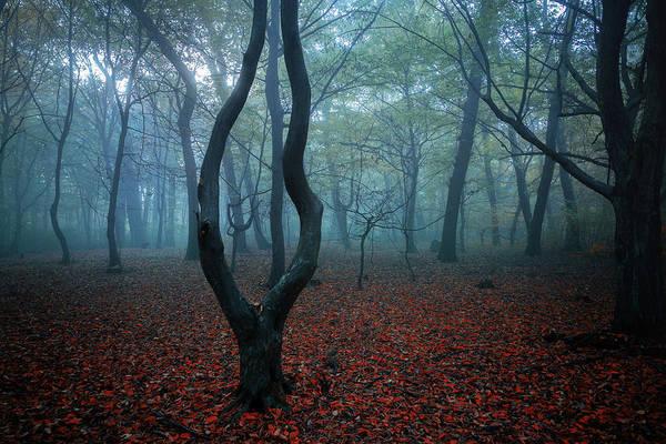 Autumn Season Wall Art - Photograph - My Autumn Room by Nicu Hoandra