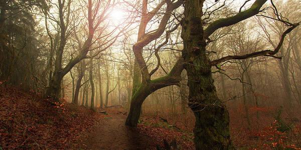 Autumn Leaves Photograph - My Autumn Walk.. by Leif L?ndal