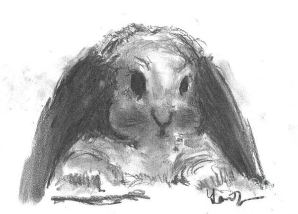 Drawing - My Baby Bunny by Laurie Lundquist
