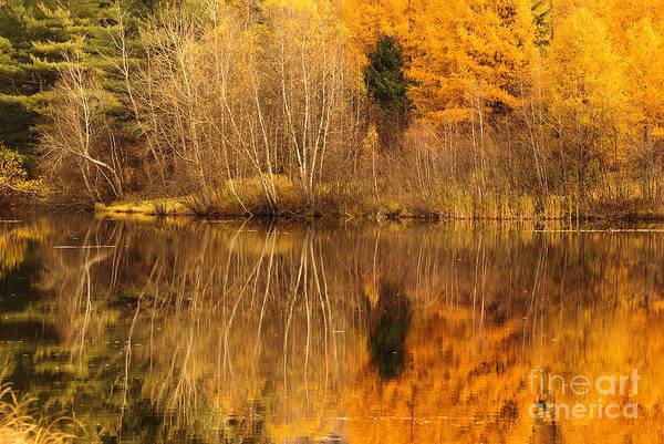 Wall Art - Photograph - My Backyard View - Autumn by Aimelle