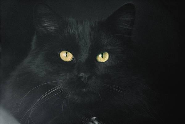 Furon Photograph - My Black Golden-eyed One by Daniel Furon