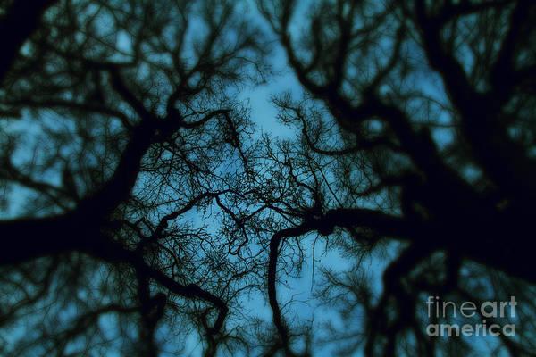 Wall Art - Photograph - My Blue Dark Forest by Stelios Kleanthous