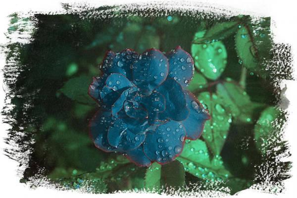 My Blue Rose Art Print