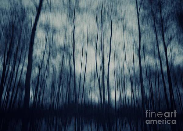 Wall Art - Photograph - My Dark Forest by Stelios Kleanthous