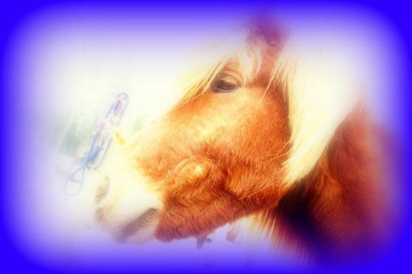 Capable Photograph - My First Love Was A Simple Horse  by Hilde Widerberg