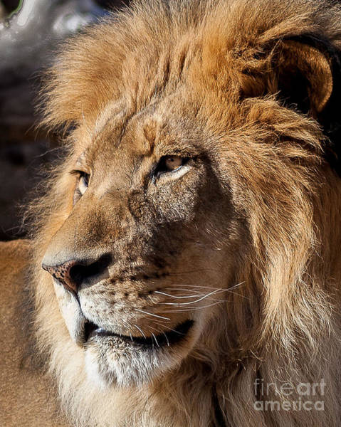 Denver Zoo Photograph - My Good Side by Steven Reed
