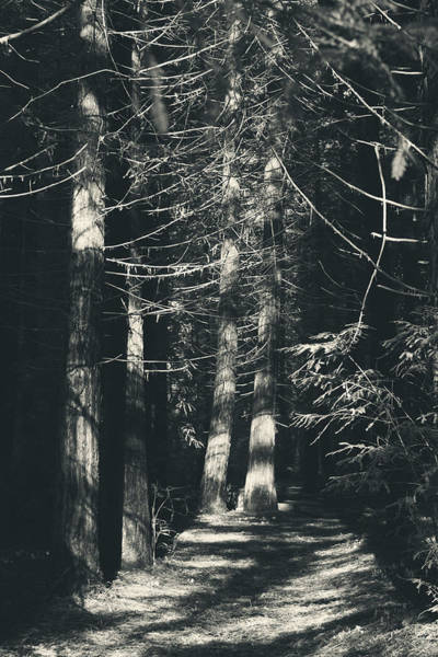 Redwoods Photograph - My Light Still Shines For You by Laurie Search