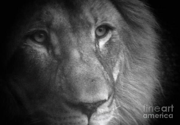 Wall Art - Photograph - My Lion Eyes by Thomas Woolworth
