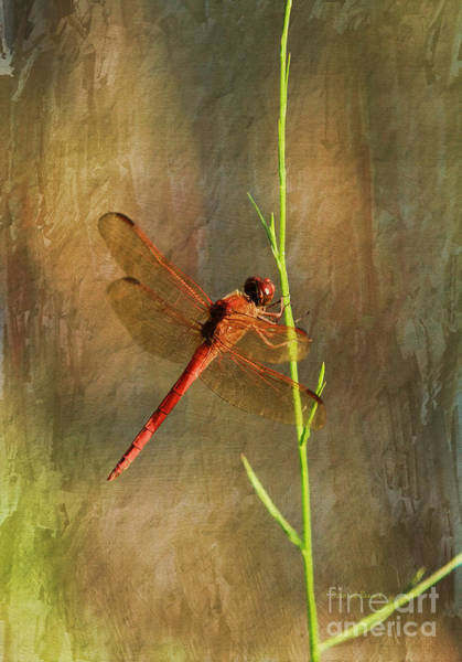 Photograph - My Little Red Friend by Deborah Benoit