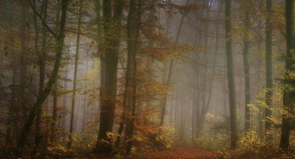 Atmosphere Wall Art - Photograph - My November by Norbert Maier