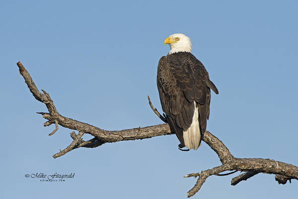 Photograph - My Perch by Mike Fitzgerald