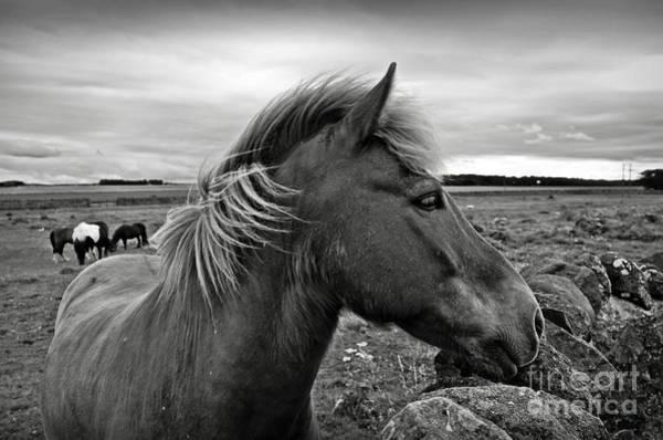 Photograph - My Scottish Friend by RicardMN Photography