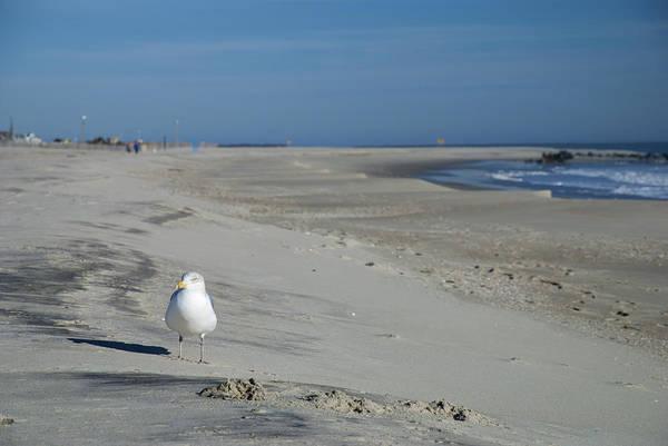 Photograph - My Seagull Friend by Jennifer Ancker