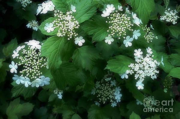 Photograph - My Secret Garden by Chris Scroggins