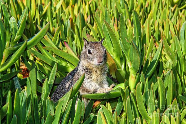 Photograph - My Squirrelly Friend By Diana Sainz by Diana Raquel Sainz