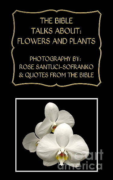 Photograph - My The Bible Talks About Flowers And Plants Book by Rose Santuci-Sofranko