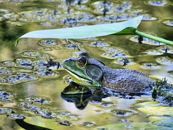 Bull Frog Photograph - My Umbrella by JC Findley