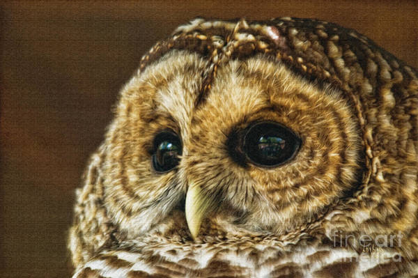 Wall Art - Photograph - My What Big Eyes You Have by Lois Bryan