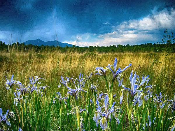 Flagstaff Painting - My Wild Iris Rows by John Haldane