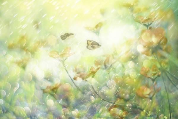 Butterfly Photograph - My Wonderful World by Delphine Devos