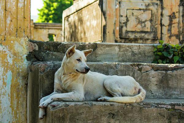 Burma Photograph - Myanmar Mandalay Mingun Local Dog Rests by Inger Hogstrom