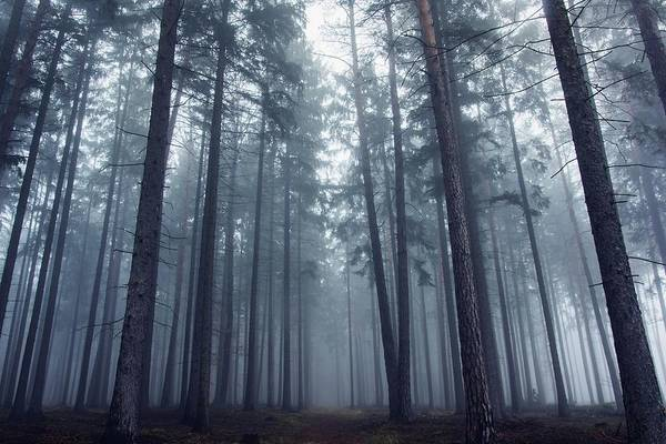 Wall Art - Photograph - Mysterious Foggy Forest. by David Charouz