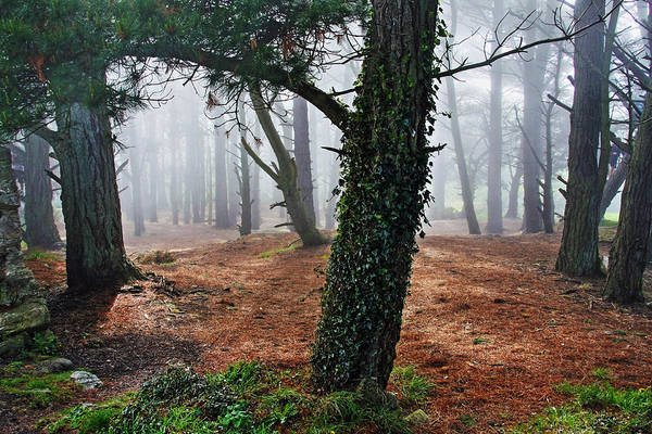 Photograph - Mysterious Forest  by Aidan Moran