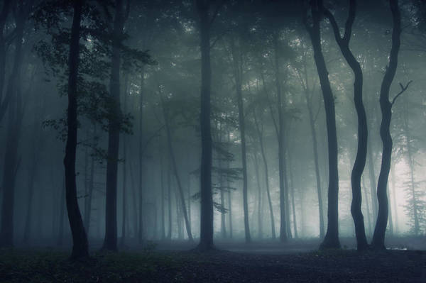 Gloomy Wall Art - Photograph - Mysterious Forest by Photocosma