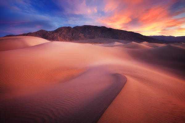 Death Valley Photograph - Mysterious Mesquite by Darren  White