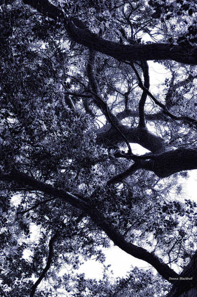 Wall Art - Photograph - Mystery Of Trees by Donna Blackhall