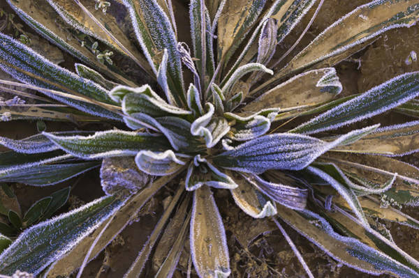 Photograph - Mystery Plant by Sherri Meyer