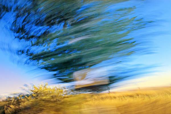 Furon Photograph - Tree On The Move by Daniel Furon
