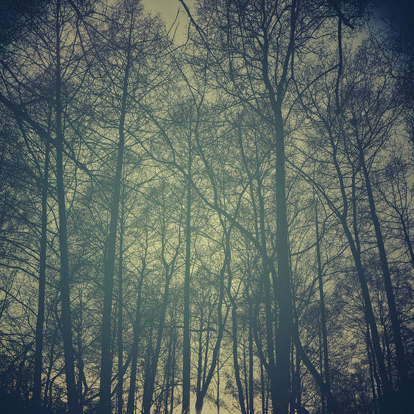 Wall Art - Photograph - Mystic Forest by Stelios Kleanthous