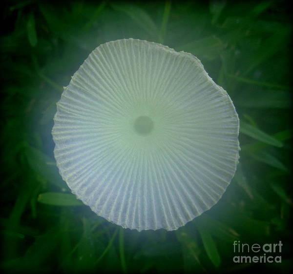 Shrooms Photograph - Mystic Mushroom by Lew Davis